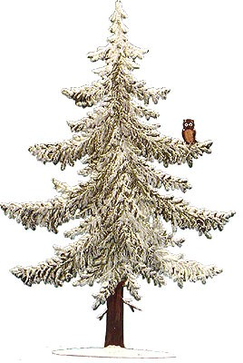 Large Pine Tree with Owl