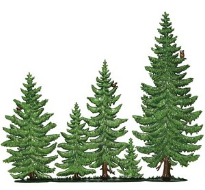 Pine Tree Group